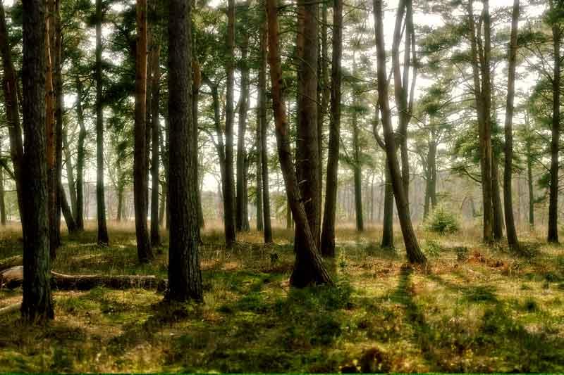 Hari Hutan Sedunia 2021