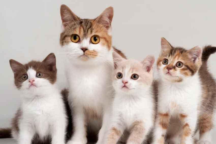 hari kucing sedunia 8 agustus 2021, hari kucing sedunia, memperingati hari kucing sedunia, hari kucing sedunia 8 agustus, hari kucing